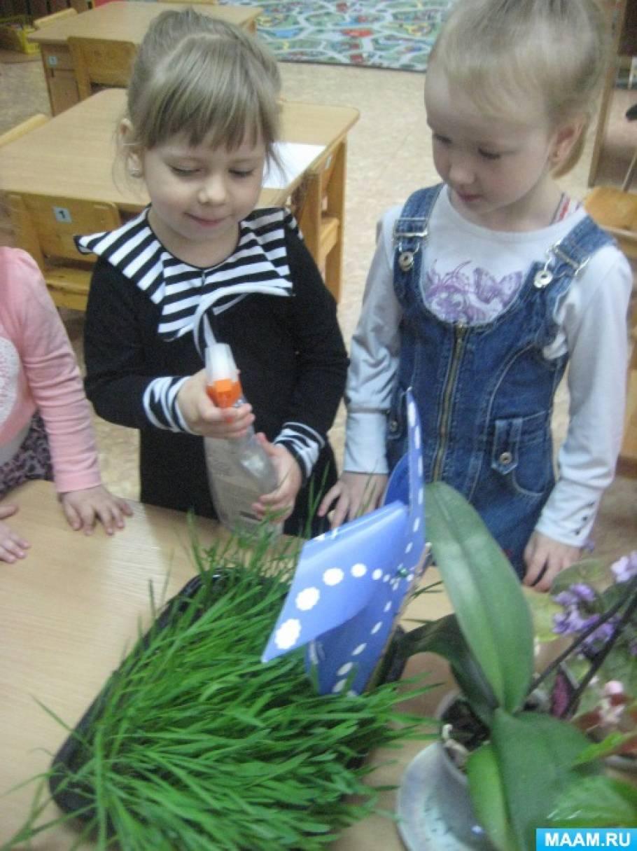 Фотоотчет «Посадка пшеницы и овса детьми младшей группы»