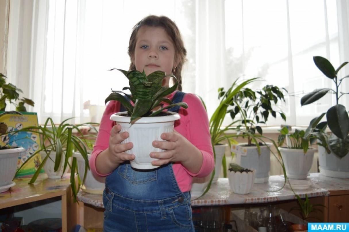 Проект «Комнатные растения» (средняя группа)