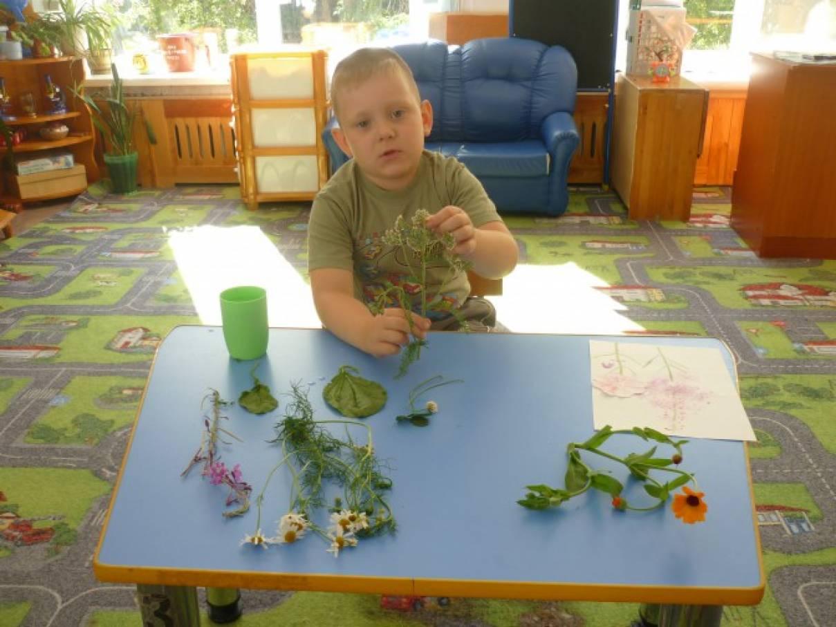 Проект «Лекарственные травы»