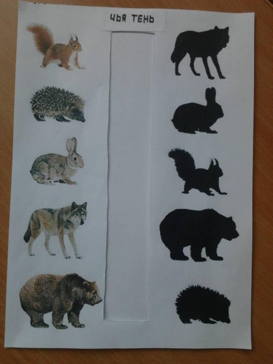Картинки для лэпбука животные леса