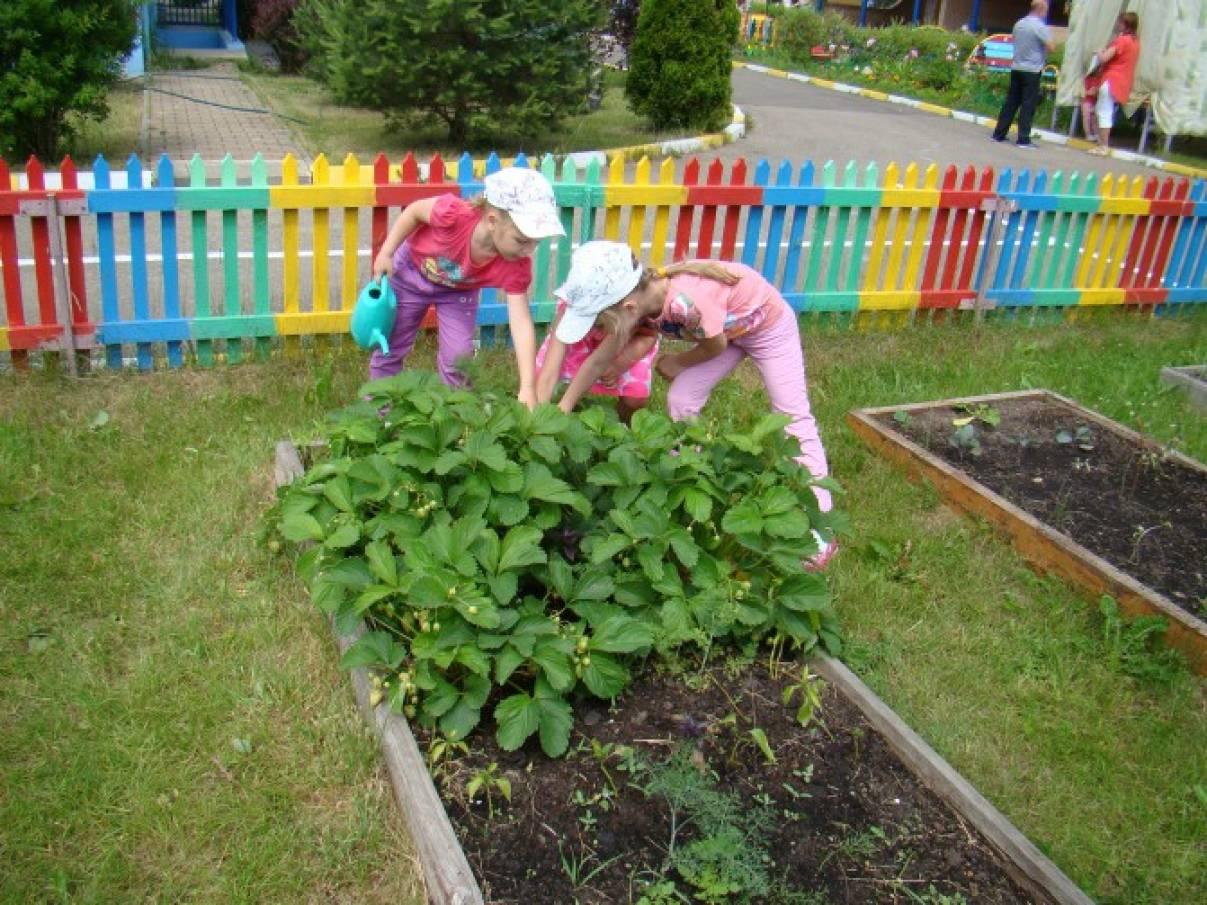 Сад и огород своими руками в детском саду 739