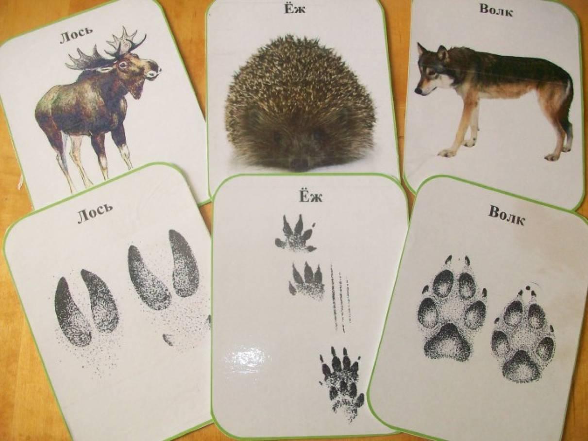 следы на снегу лесных животных фото