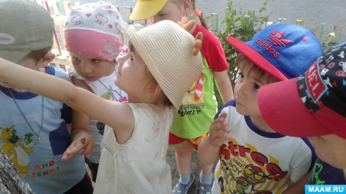 Фотоотчёт в средней группе по проекту «Шестиногие малыши— насекомые»