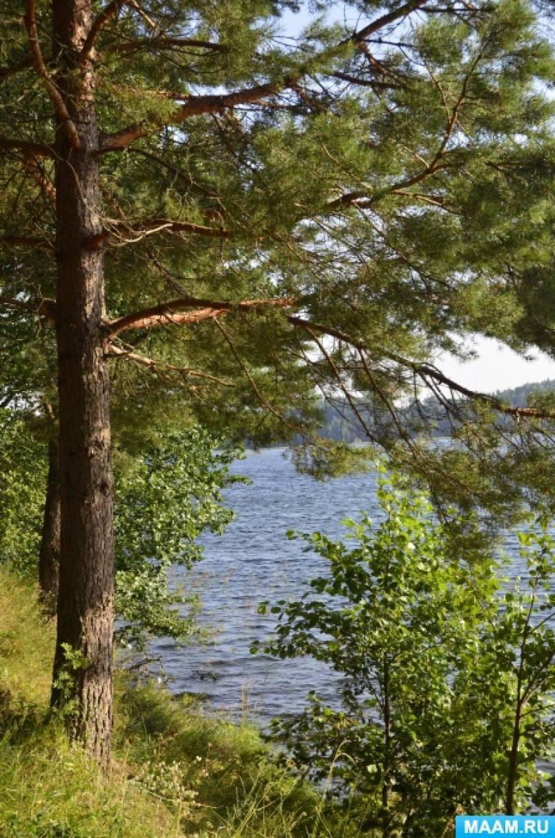 Фотозарисовка «Природа Псковского края. Озеро Велье»