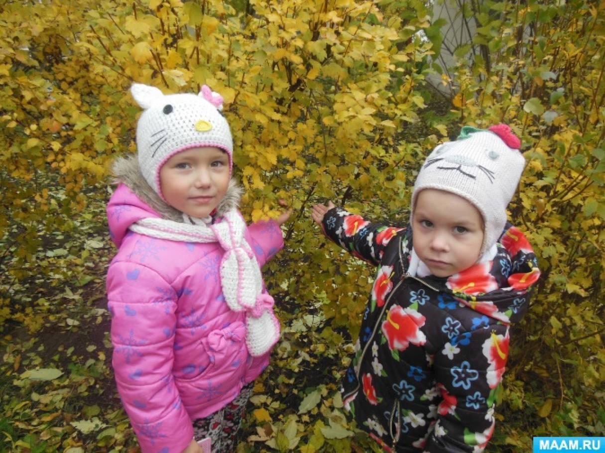 Картинки яблони для детей детского сада