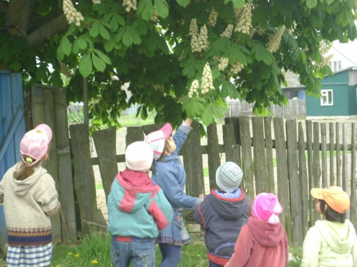 Конспект весенней прогулки «Наблюдение за цветущими деревьями и кустарниками»
