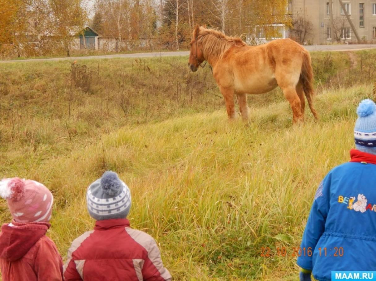 поиск дошкольник знакомство с домашними животными