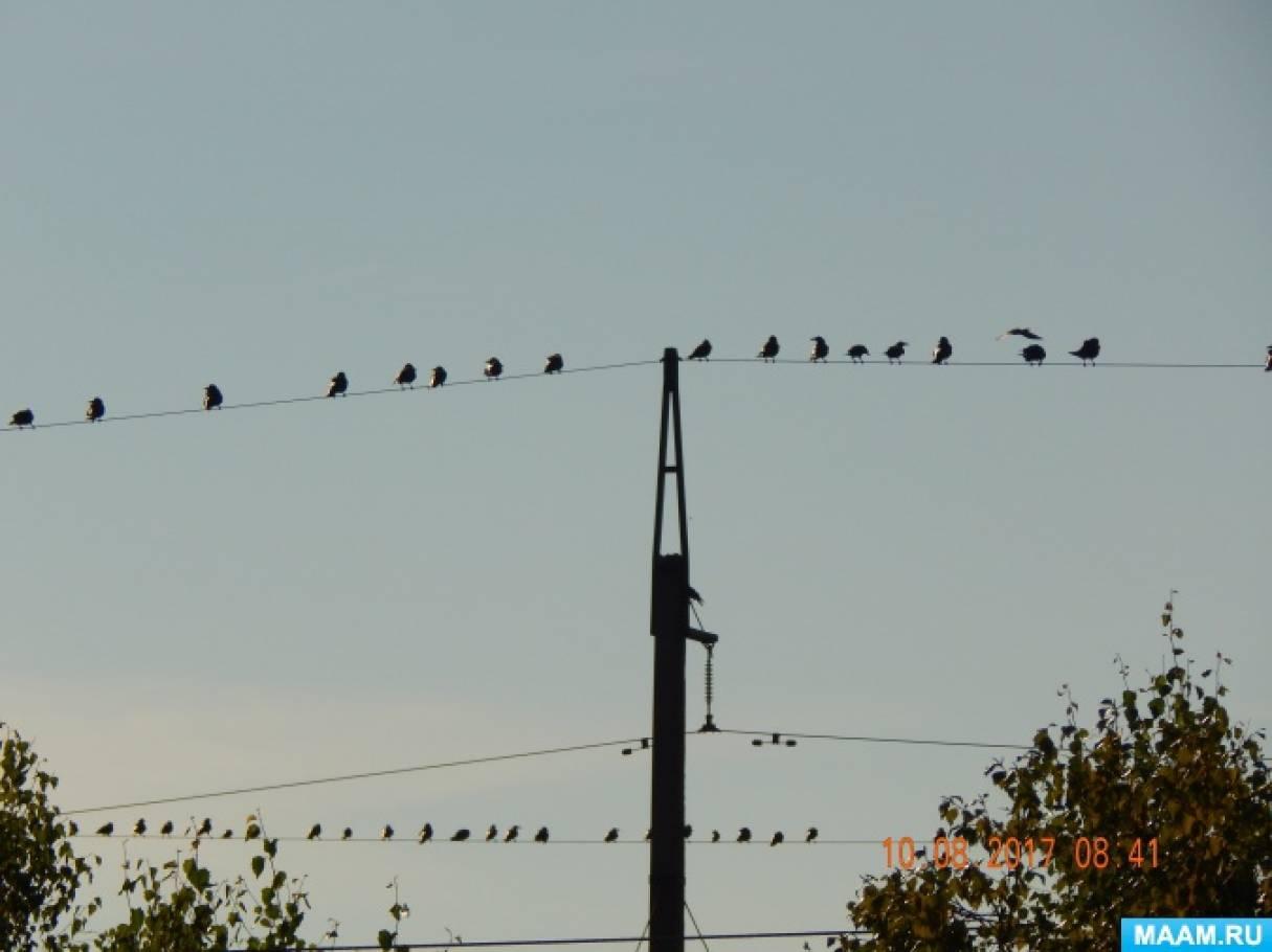 Конспект осенней прогулки «Наблюдение за перелетными птицами»