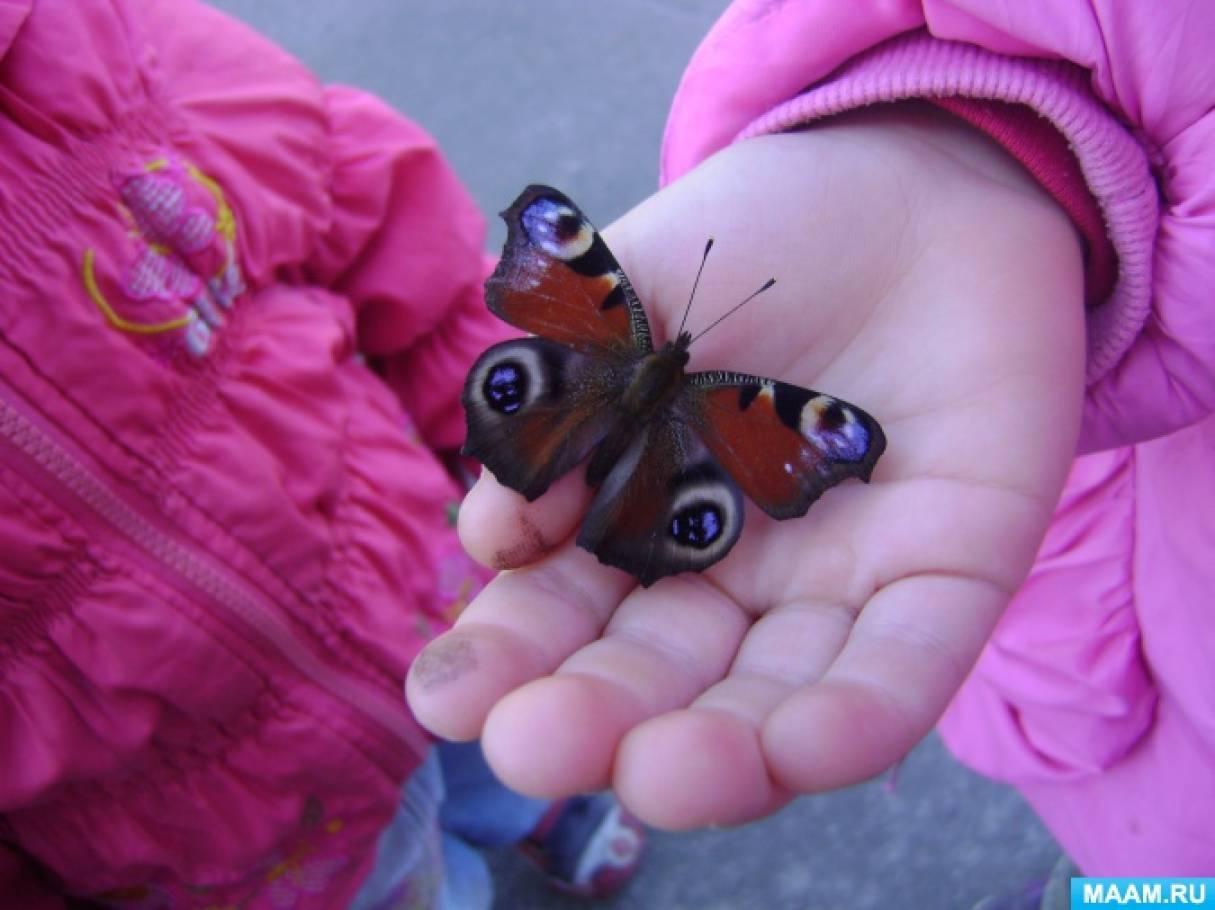 Формирование экологических знаний. Конспект познавательной прогулки «Наблюдение за бабочками»