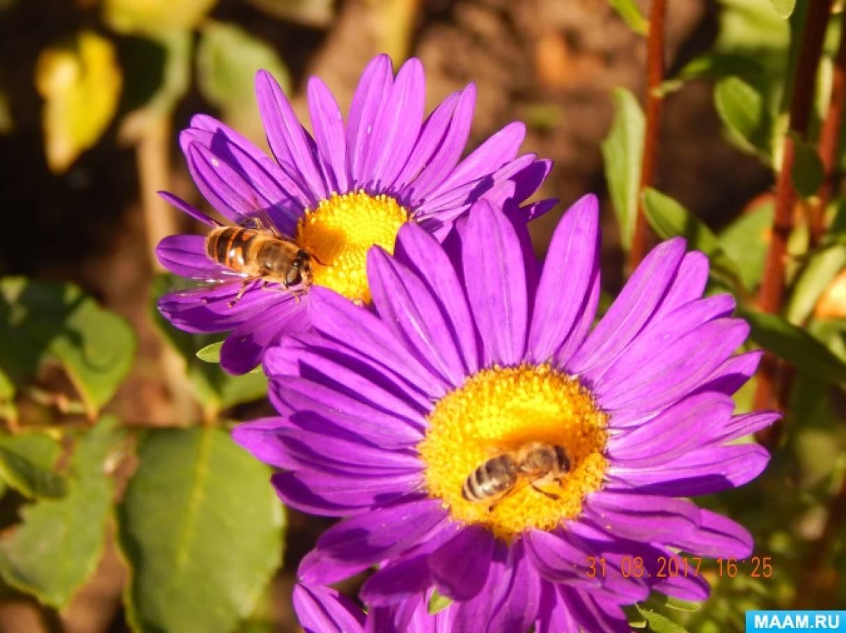 знакомство с насекомыми средней группе