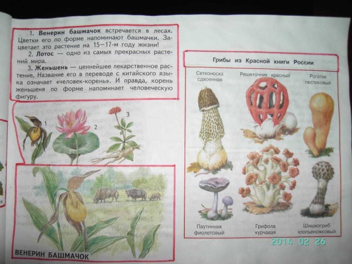 знакомство с красной книгой в начальной школе
