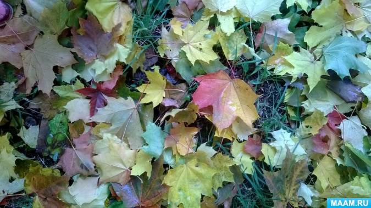 Фототчет прогулки «Осень золотая»