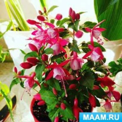 Фотозарисовка «Мои комнатные растения»