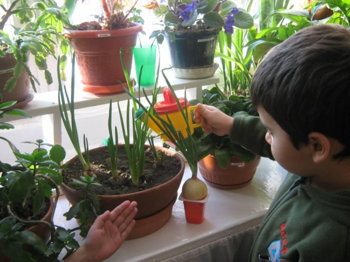 Картинки дети делают опыты в уголке природы