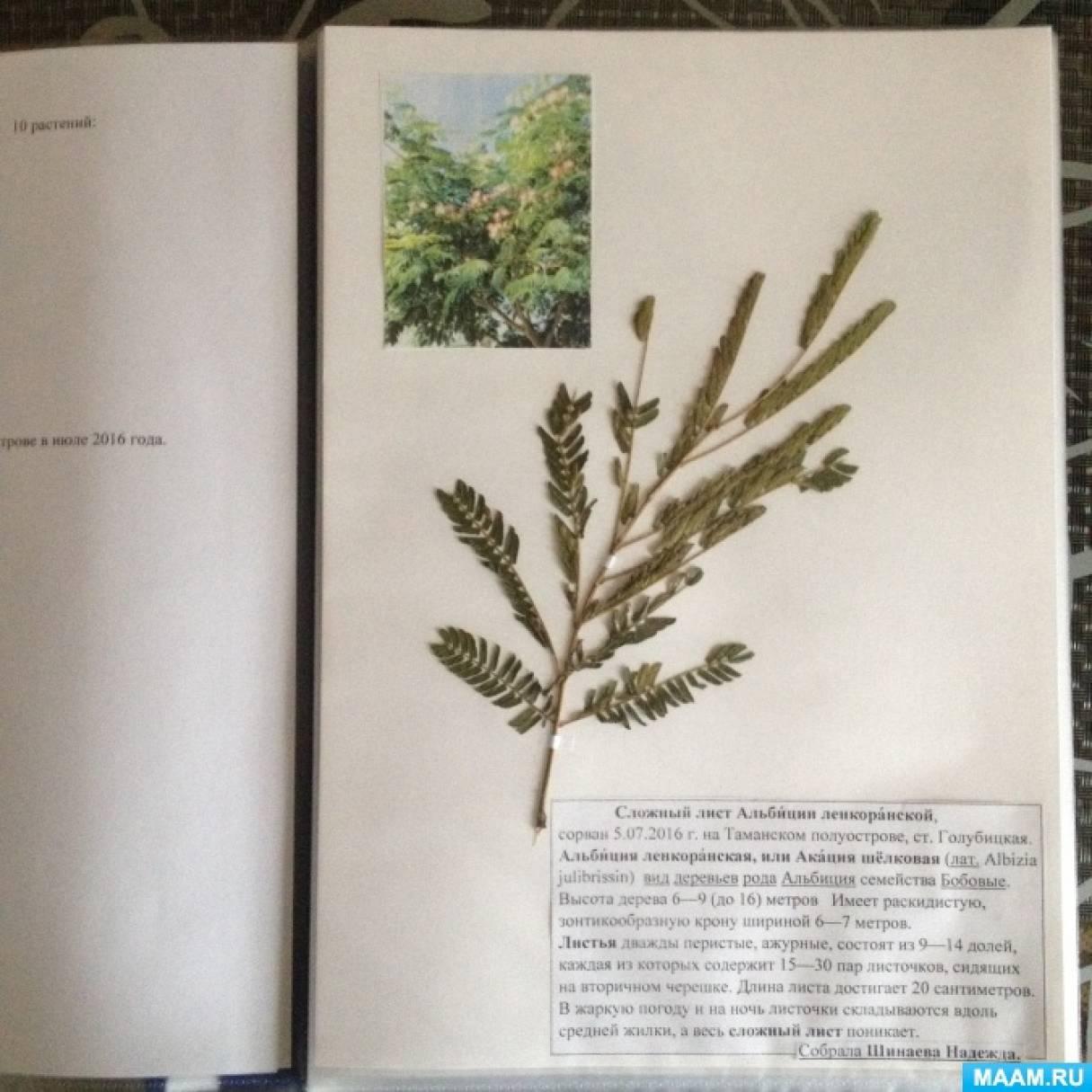 Гербарий— домашнее задание на лето по биологии (фотоотчет)