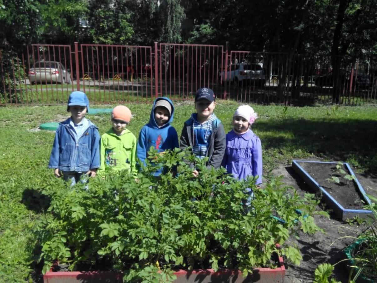 Сбор урожая. Фотоотчет «Ах, картошечка»