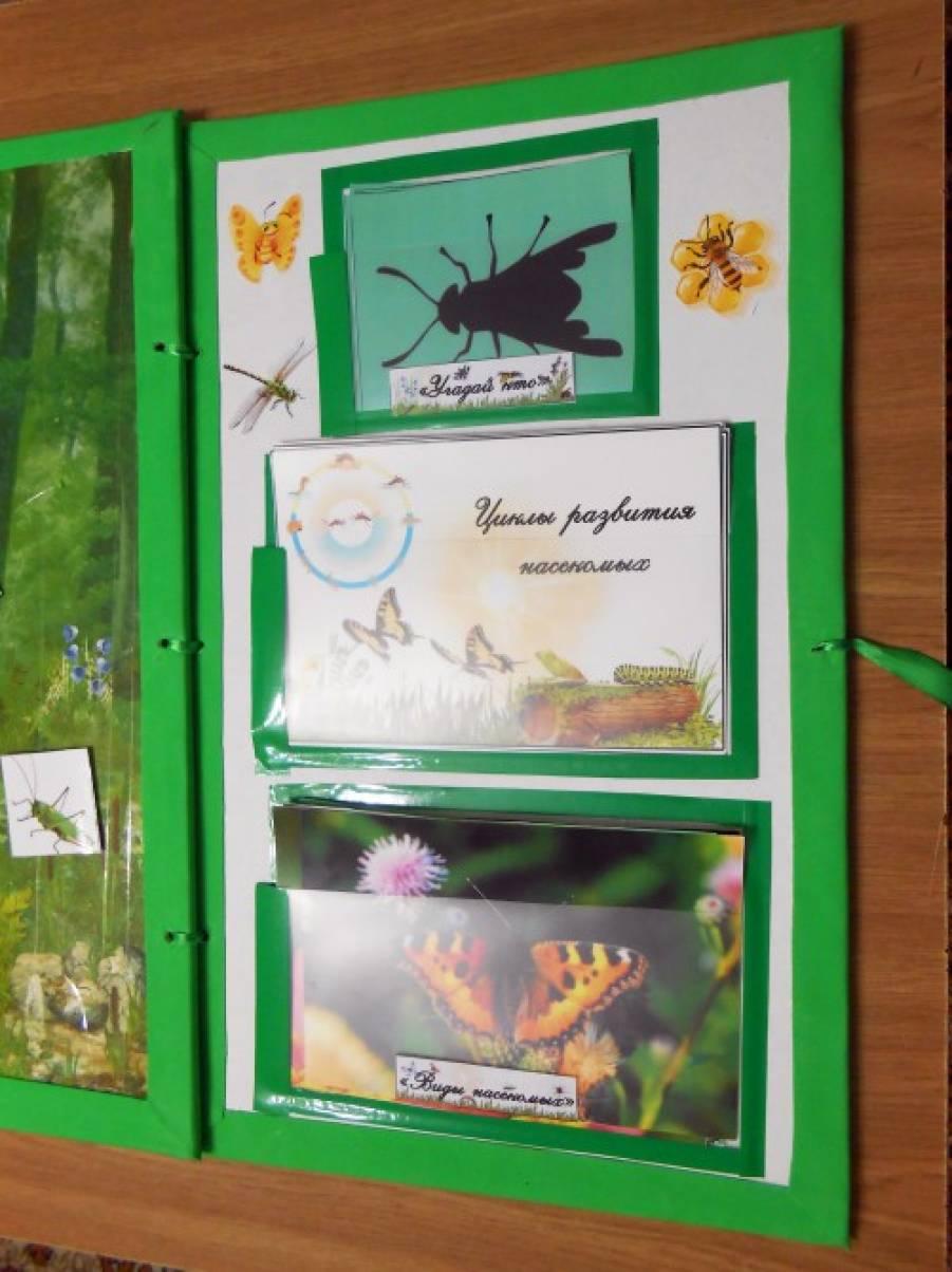 Лэпбук про насекомых своими руками