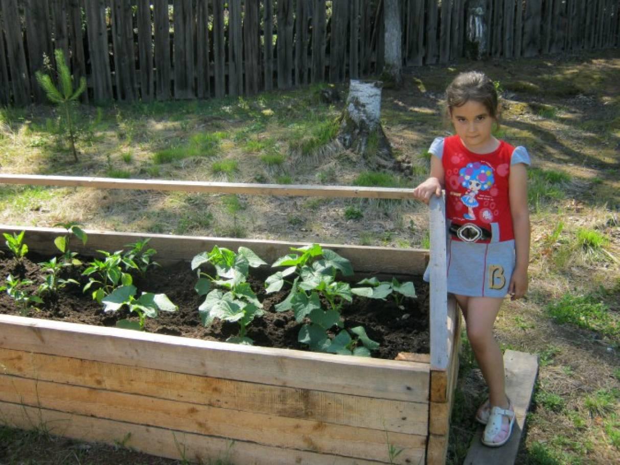 Мини-огород на участке