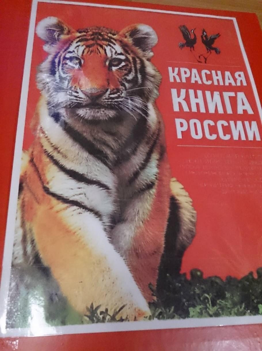 Лэпбук «Красная книга»