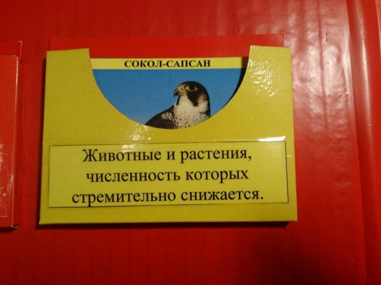 Красная книга с животными своими руками 29