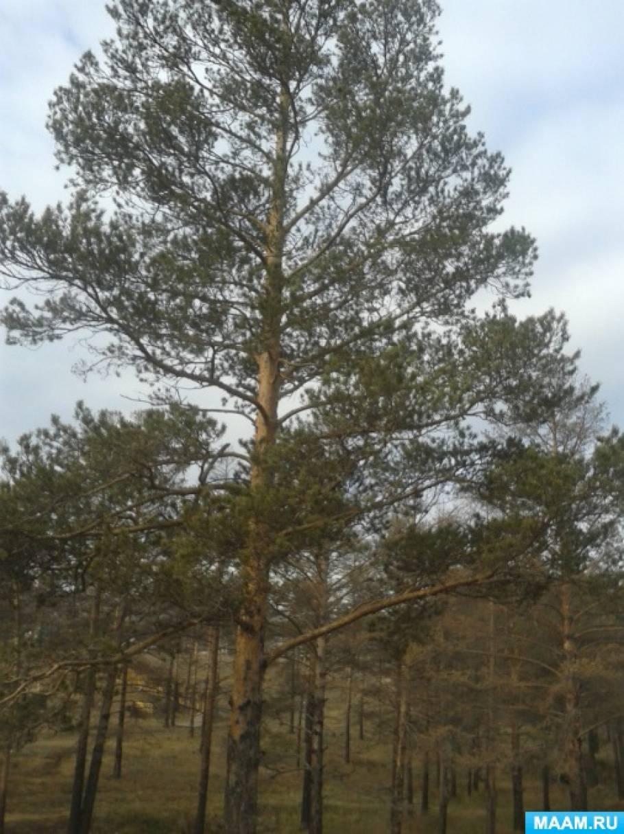 Конспект занятия по экологическому воспитанию «Лес в жизни человека». Старший возраст