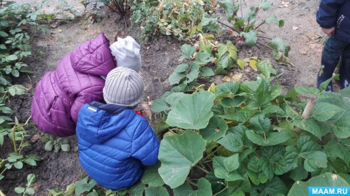 «Чудо-огород в нашем детском саду».