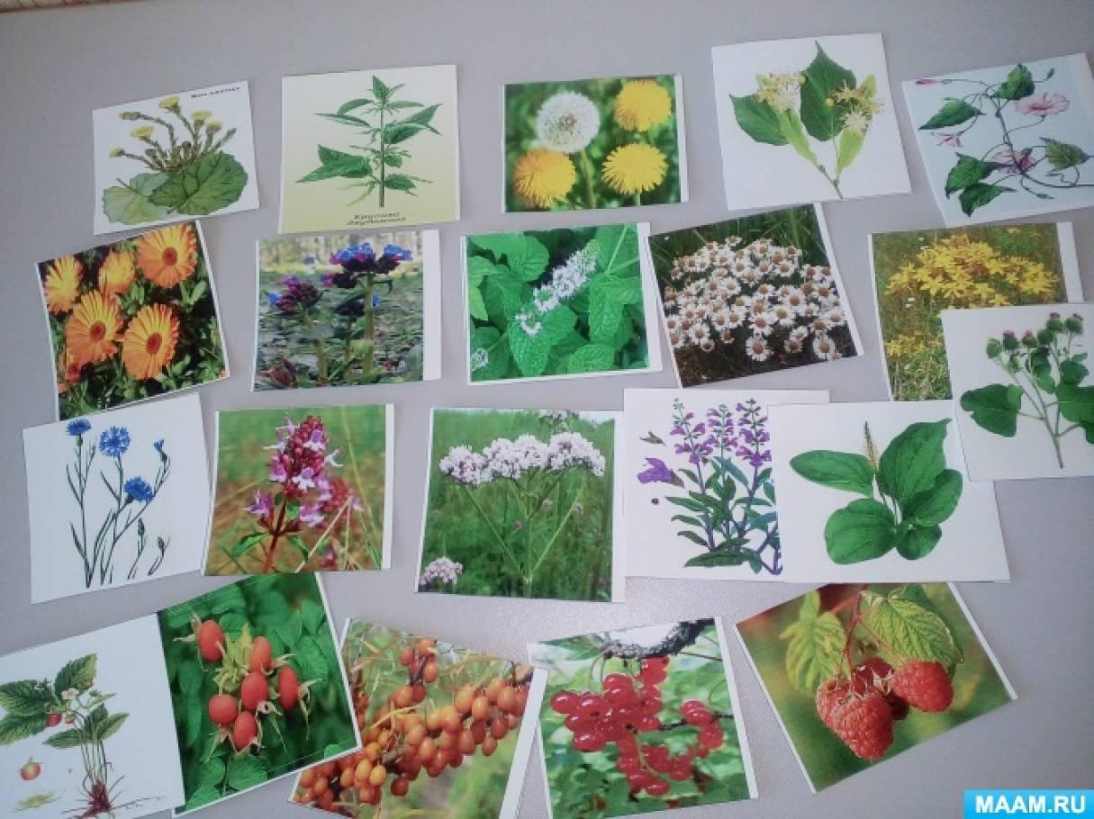 Лекарственные растения приморского края реферат 6412