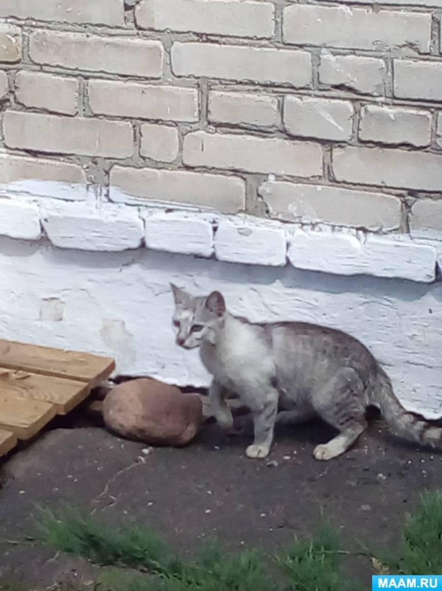 Фотоотчет «Наблюдение за кошкой с котятами на прогулке»