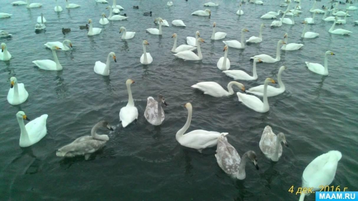 фото лебединое озеро в алтайском крае