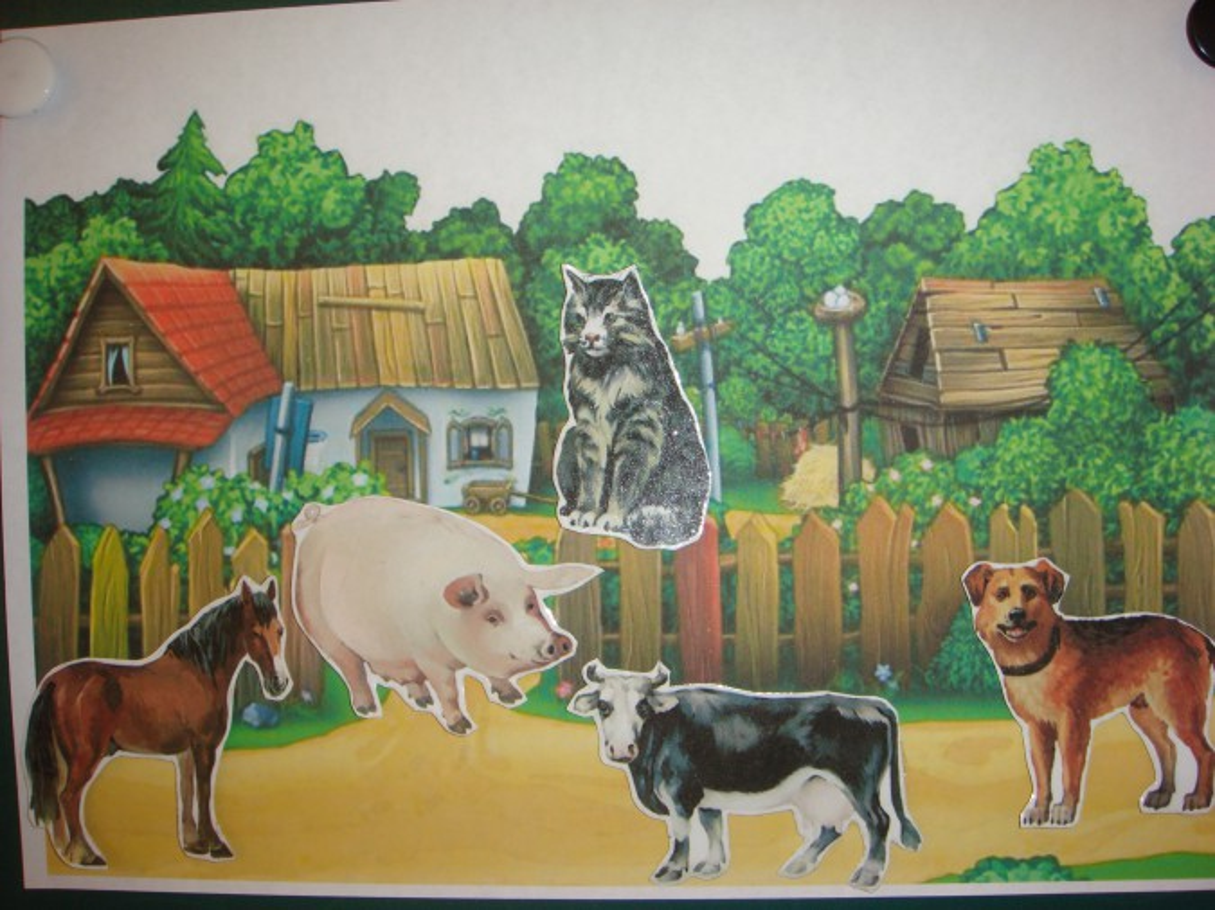 Жилье домашних животных картинках для детей