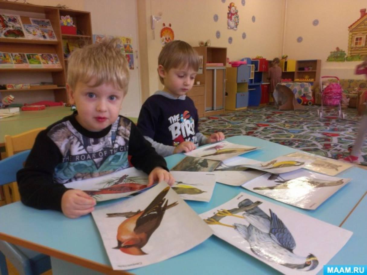 знакомство дошкольников с зимующими птицами