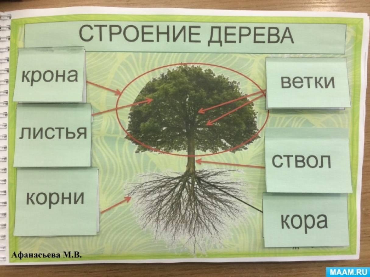 части дерева в картинках чистого