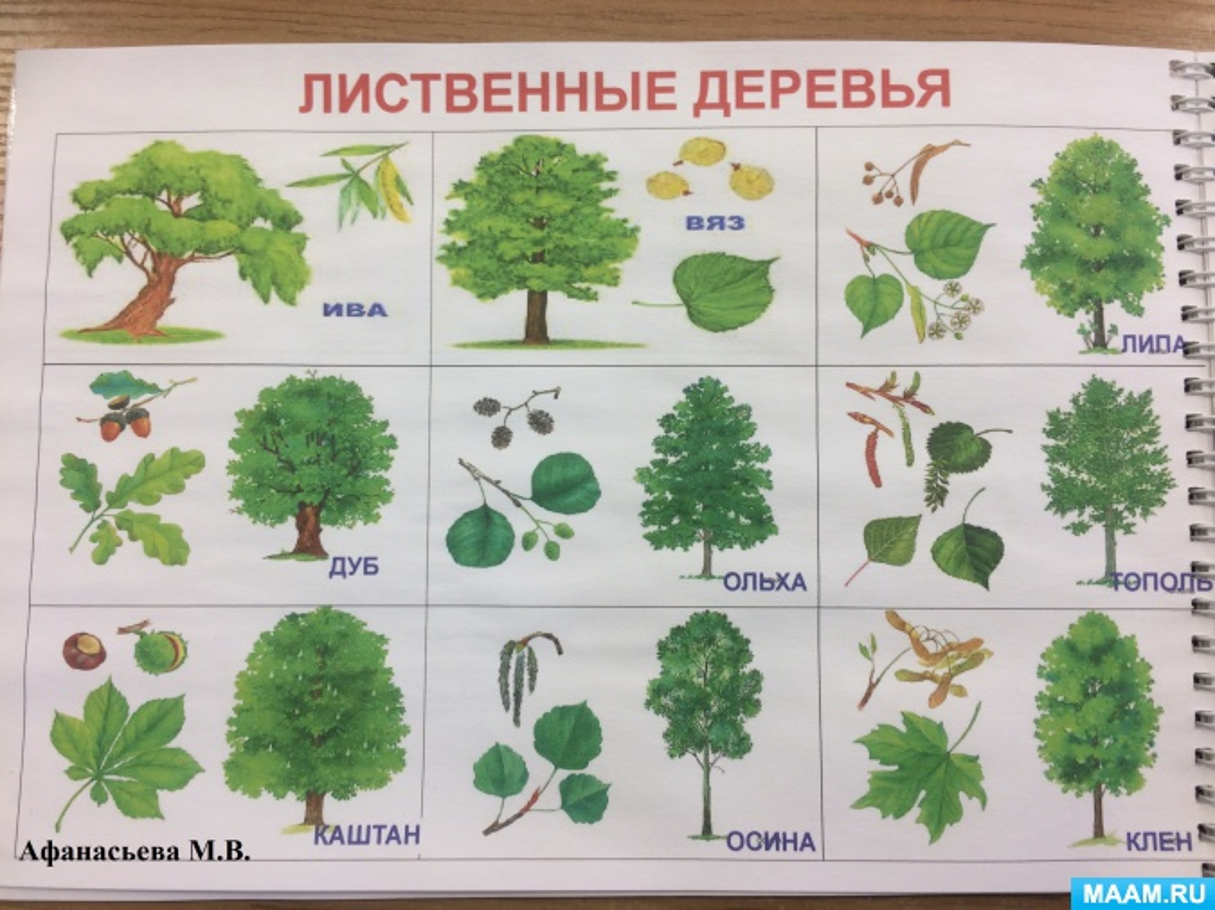 Деревья и листья в картинках для детей с названиями