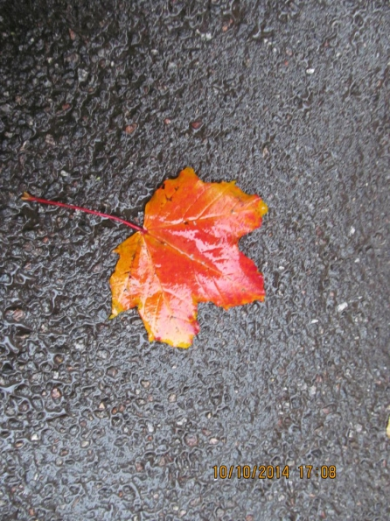 Осенняя пора, очей очарование…