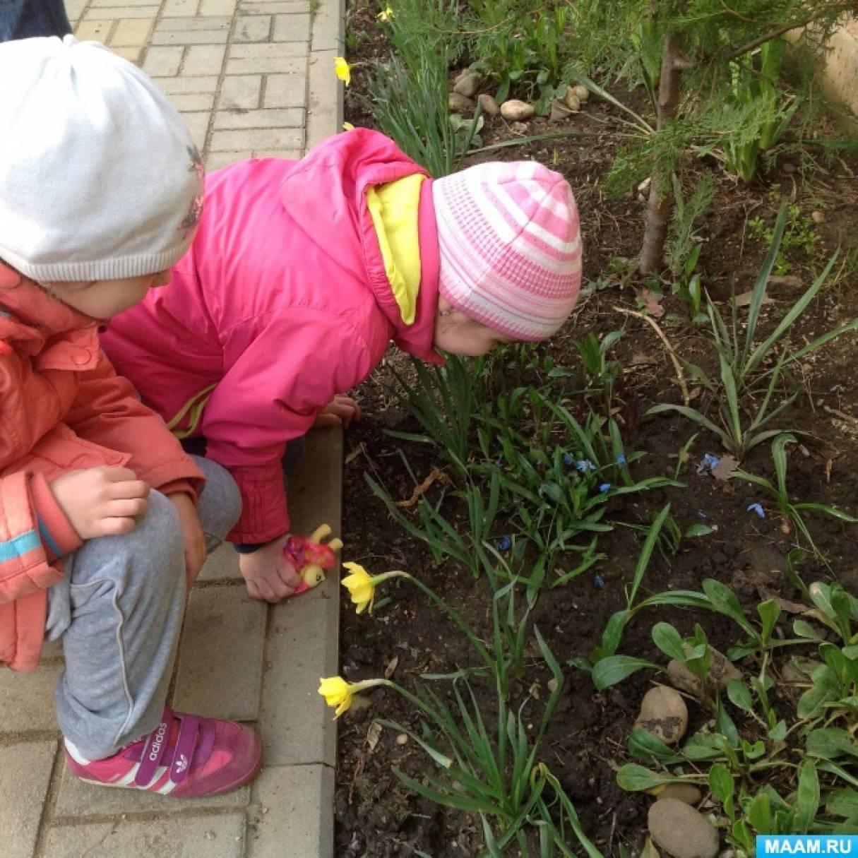 Наблюдение за первоцветами ранней весной в старшей группе.