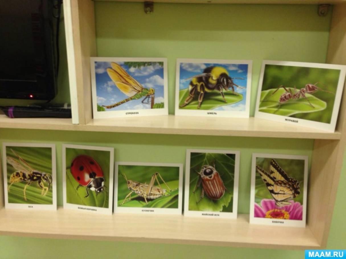 Конспект комплексного занятия в средней группе «На лугах Кубани бабочки летают»
