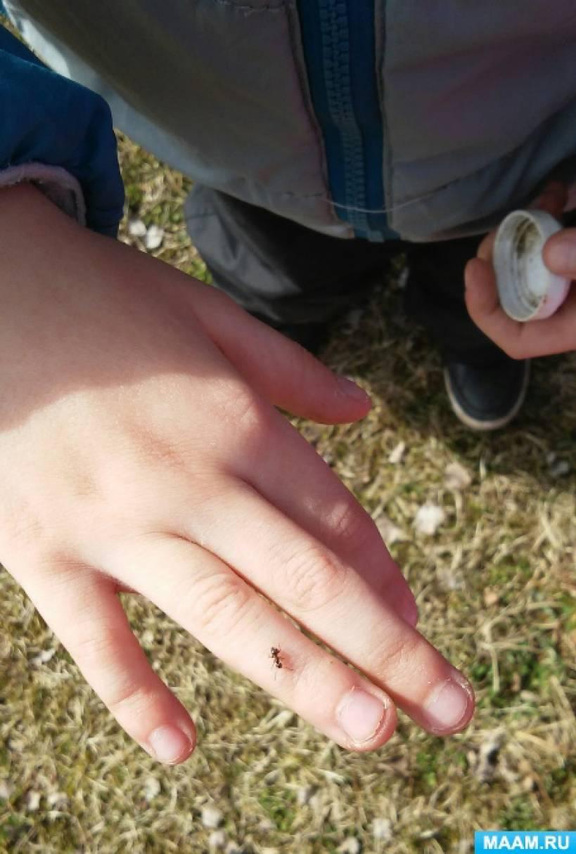 Конспект прогулки «Наблюдение за насекомыми»