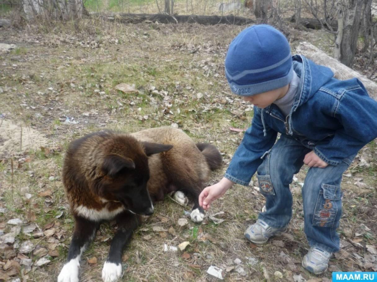 Консультация для родителей «Одно из постоянных наших дел— забота о кошках и собаках»