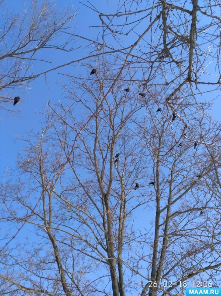 Конспект прогулки «Наблюдение за воронами у нас в детском саду»