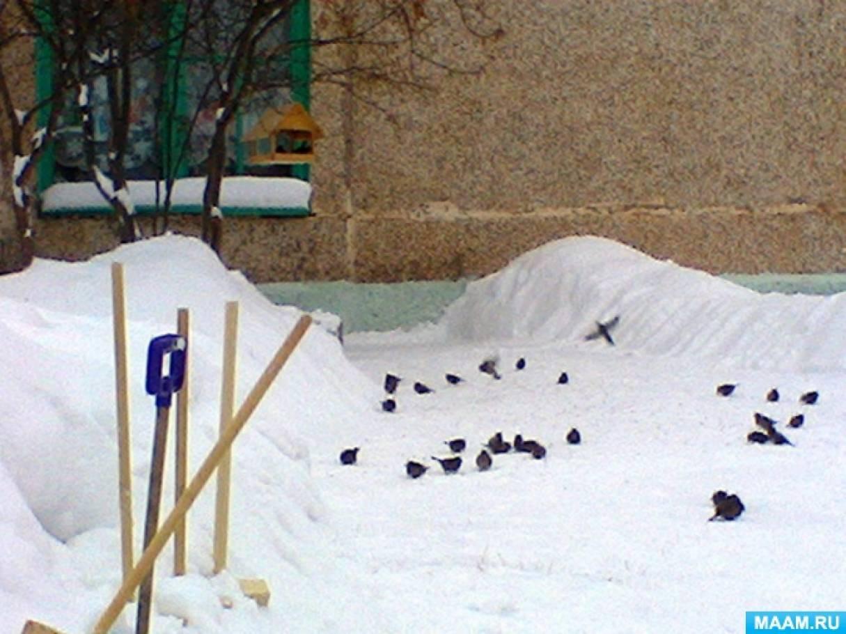 Конспект прогулки «Наблюдение за зимующими птицами» с детьми 5–6 лет