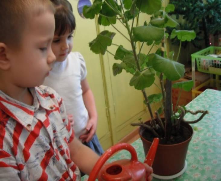 Организация совместной деятельности педагога и детей по труду в природе в средней группе по уходу за комнатными растениями Видео