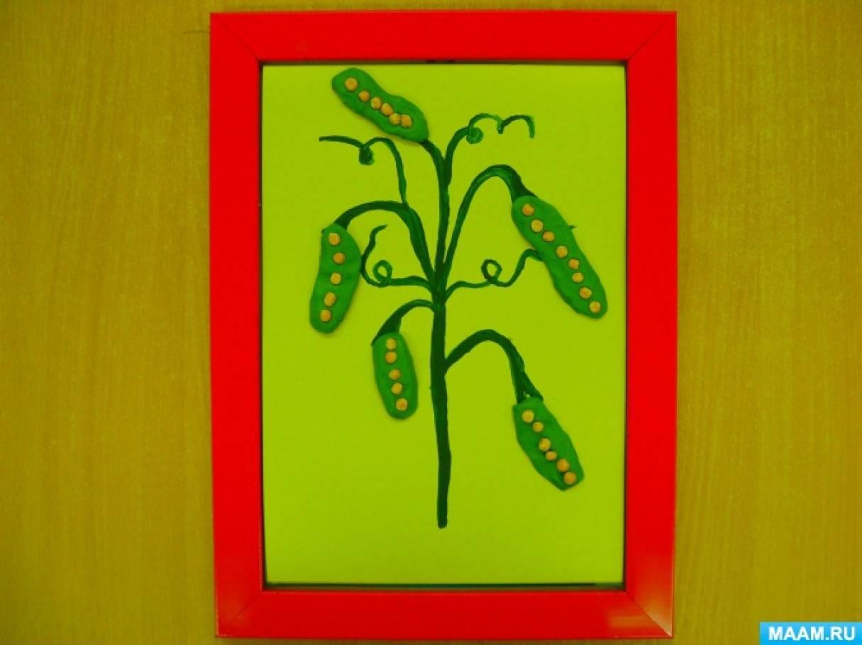 Художественное творчество «Урожай зелёного горошка»