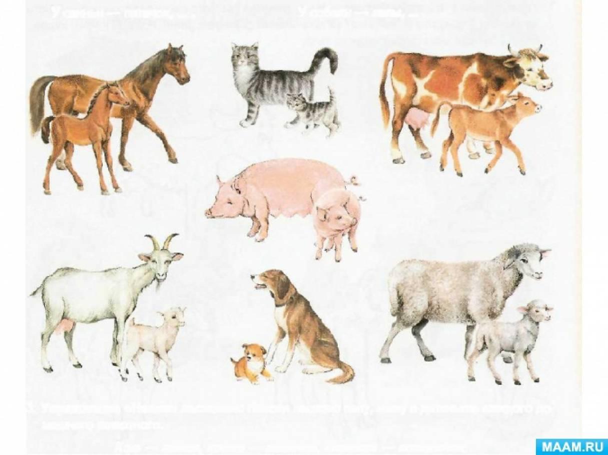Реферат домашние животные и их детеныши 5398