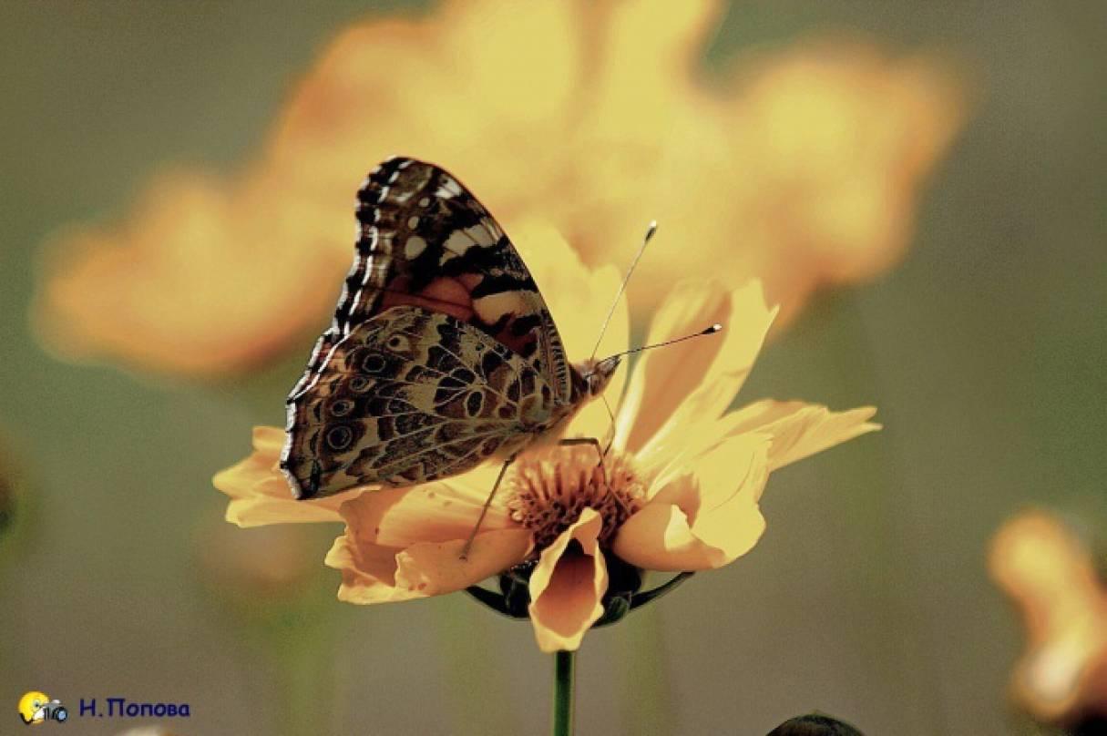 Сказка о том, как появилась первая бабочка
