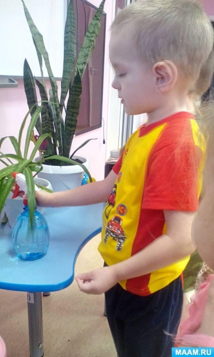 как знакомят детей с комнатными растениями