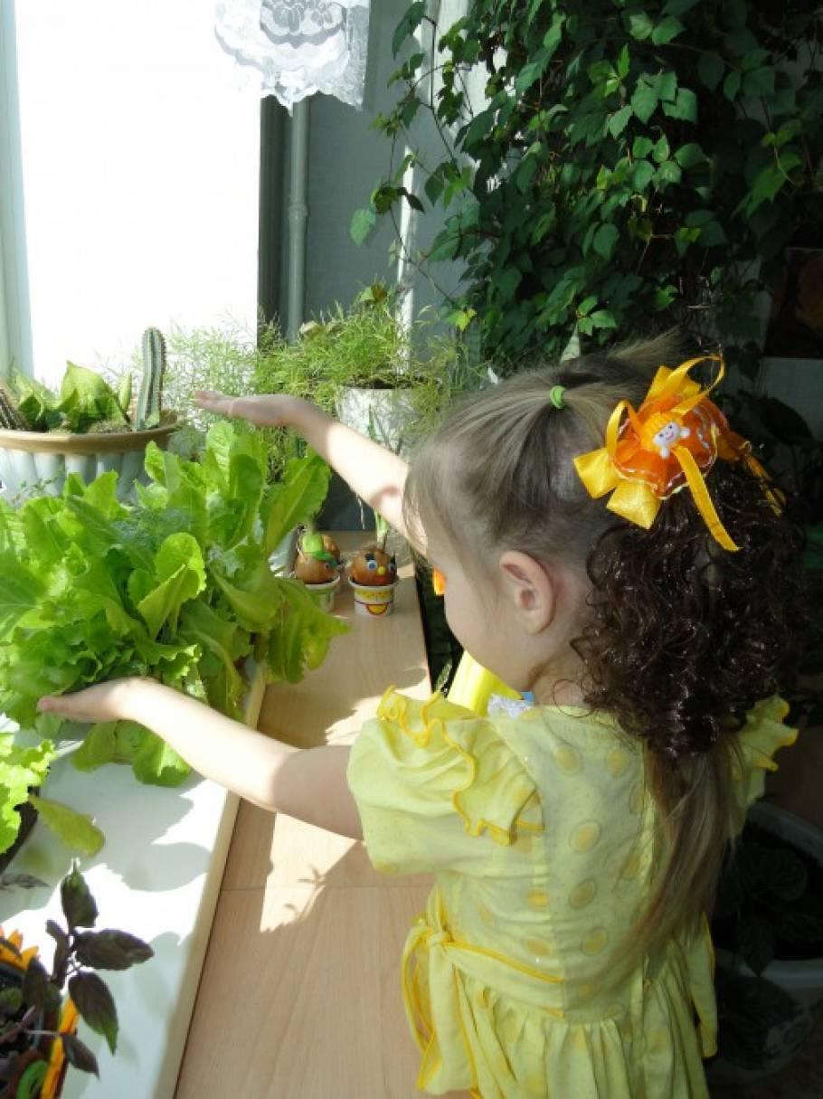 Консультация и советы воспитателям «Организация огорода на окне»