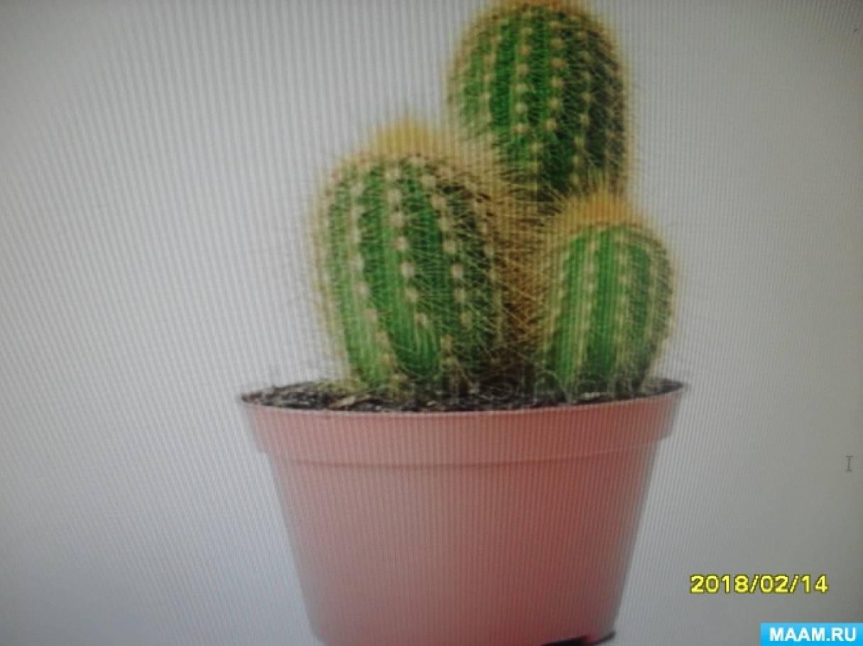 Конспект образовательной деятельности по ознакомлению дошкольников с природой в старшей группе «Знакомство с кактусами»