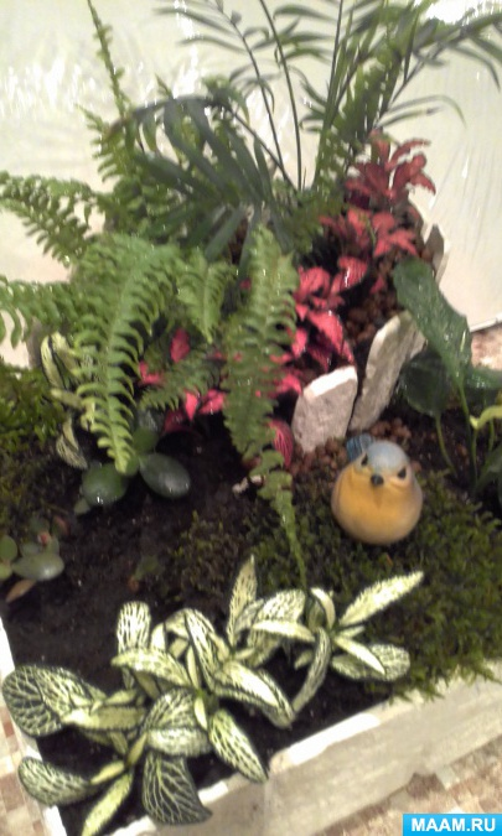 Изготовление мини сада для группы в уголок природы.