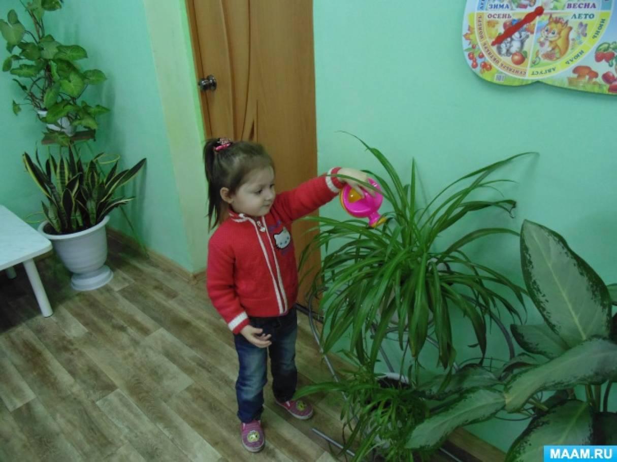 знакомим детей с садовыми цветами
