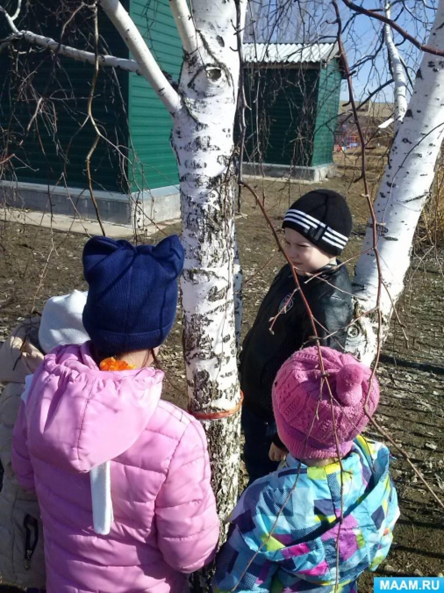 Наблюдение за деревьями весной (фотоотчет)